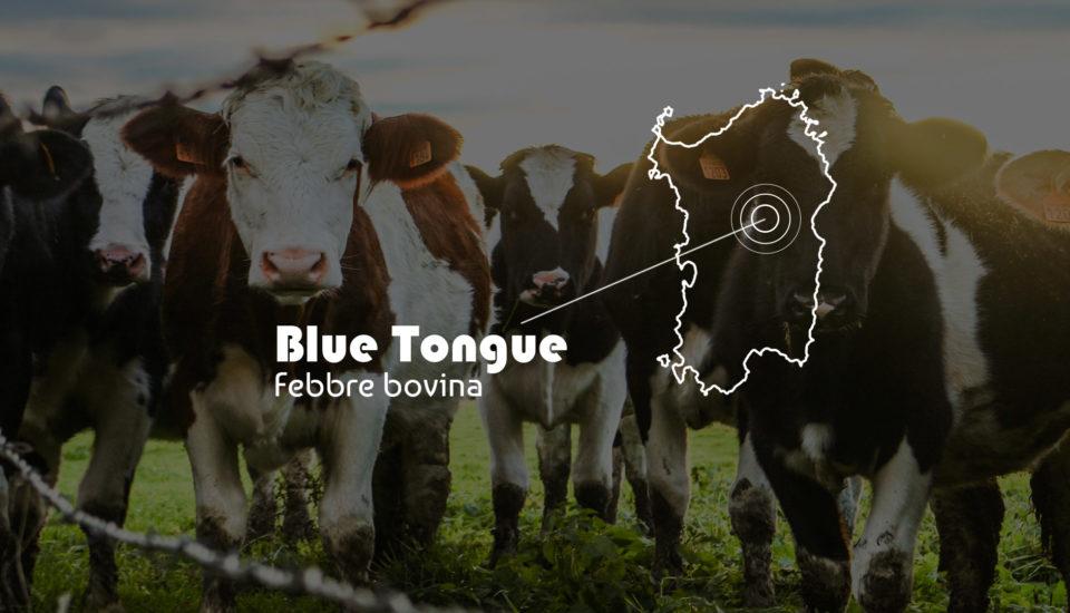 Blue tongue, in Sardegna 2mila allevamenti a rischio chiusura